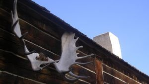 How to Mount Moose Antlers: Mounted antlers can be used decoratively.