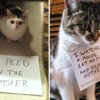 20+ A$$hole Cats Being Shamed For Their Crimes