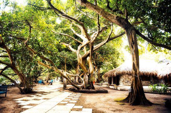 Jardines del Hotel San Pedro de Majagua