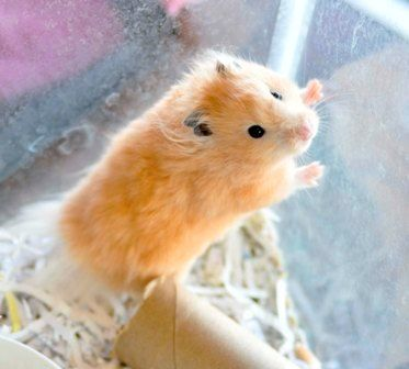 Cute Pets amp Little Critters Pinterest 4 Month Olds Hamsters and A
