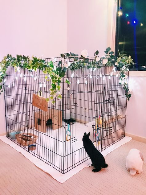 New Pet Rabbit Indoor Bunny Cages Ideas In 2020 Pet Pig House
