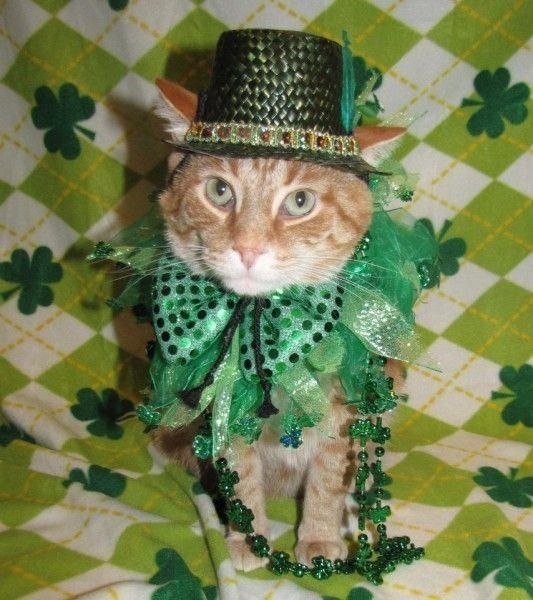 20 Dogs & Cats Who Are Ready For St. Patrick's Day   Her Campus #stpatricksdaycostume