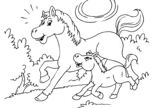 coloring page horse and foal rodeo queen pinterest