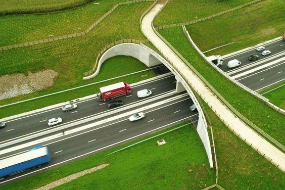 Wildlife bridge UK