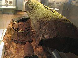Egtved Girl - A menina de Egtved ( Aproximadamente  (i)  ouço ɛɡtʋɛð ) ( c . 1390-1370 aC) foi uma Idade do Bronze Nórdica menina cujos restos bem preservados foram descobertos fora Egtved , Dinamarca em 1921. Aged 16-18 no momento da morte, ela era magra, 160 cm de altura (cerca de 5 pés 3 pol), tinha cabelos loiros curtos e unhas bem aparadas. [1] Seu enterro foi datado por dendrocronologia de 1370 aC. Ela foi descoberta juntamente com restos cremados de uma criança em um carrinho de mão…
