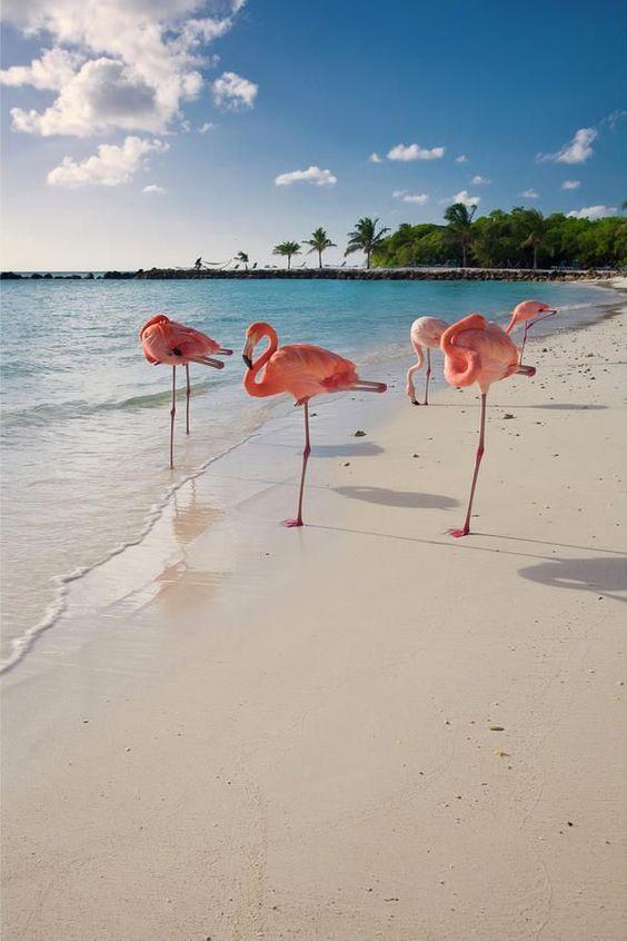 ハワイの砂浜にフラミンゴ
