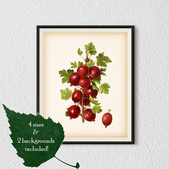 Kitchen art Kitchen illustration  Berry by RestoredBotanicalArt
