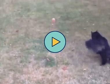 esse gatinho é péssimo na bola