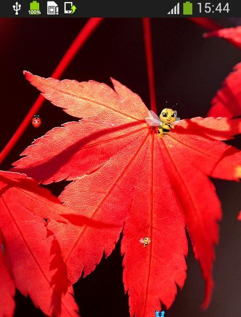Gambar Bunga Jatuh Bergerak Gugur Daun Wallpaper Hidup For Android Apk Download 5 Daftar Aplikasi Edit Photo Bergerak Terb Gambar Bunga Bunga Menanam Bunga