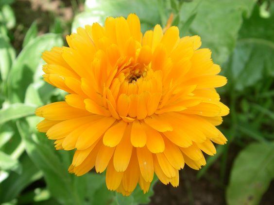 fleurs orange et jaunes - Buscar con Google