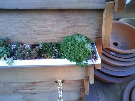 cute window box above outdoor sink