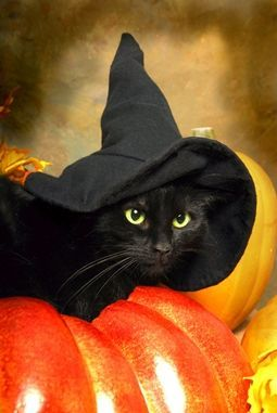 Halloween Cat  •  •  •  •  •  #halloween #pumpkin #cat #chat #gato #catlover #catpassion