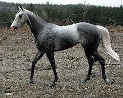 dark grey horse - Google Search