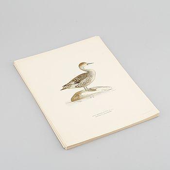 """LITOGRAFISKA TRYCK, M och W von Wrights """"Svenska fåglar"""", A. Börtzells, Stockholm, 1917-29."""