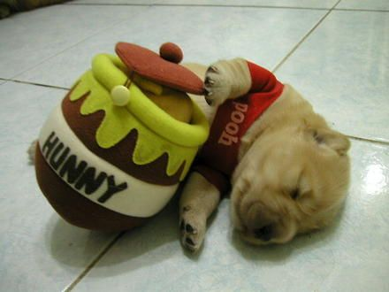 Puppy Wearing a Winnie the Pooh Costume | Dog Pictures, Photos ...