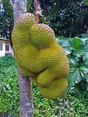 20 Unusually-Shaped Fruits And Vegetables That Look Like Something Else