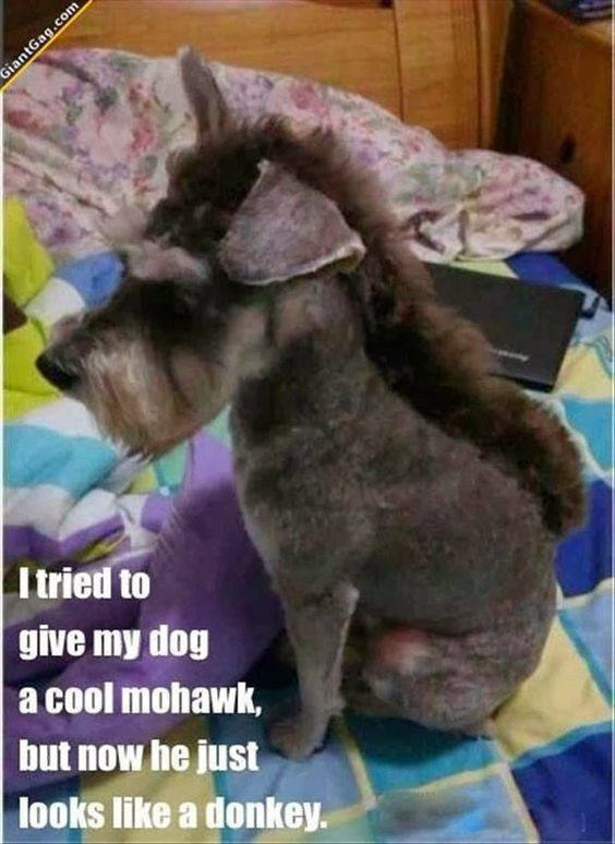 funny dog pictures. Cracking me up funny. Donkey dog