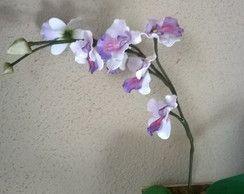 Orquídeas em eva