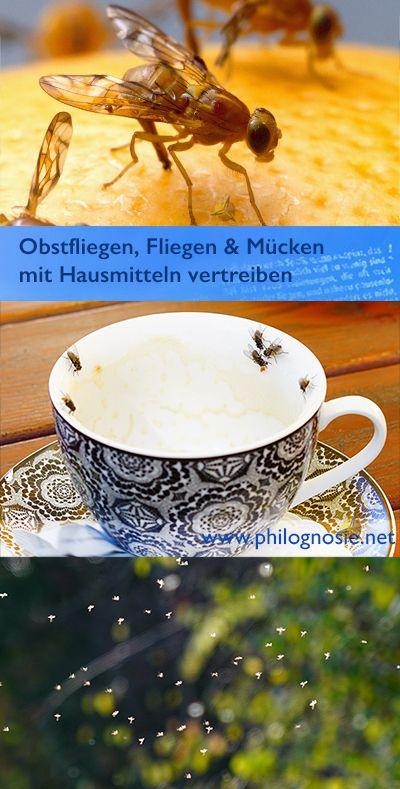 Pin Von Philognosie Autoren Auf Haushaltstipps Obstfliegen Kuche Kleine Fliegen