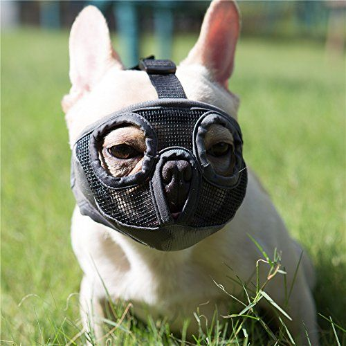 Jyhy Short Snout Dog Muzzle Adjustable Breathable Mesh B Https
