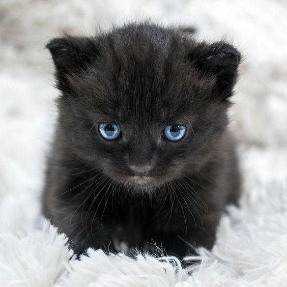 Kitten-Shooting http://fc-foto.de/36405021