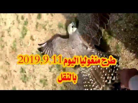 طرح منغوليا اليوم 2019 9 11 بالنقل صيد الصقور Youtube Falcon Hunting Hunting Movie Posters