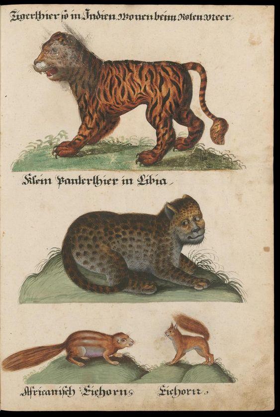 Aquarelle von Säugetieren, Vögeln, Insekten und Pflanzen Süddeutschland, 17. Jh. Zentralbibliothek Zürich
