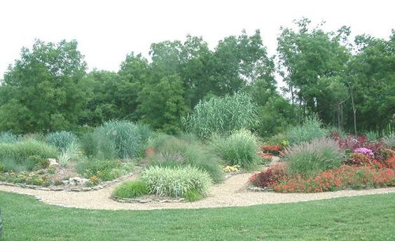 Ornamental grasses grasses and gardens on pinterest for Large garden grasses
