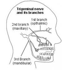 The Trigeminal nerve and its brancehes  #TrigeminalNeuralgia #TrigeminalNeuralgiaAwareness