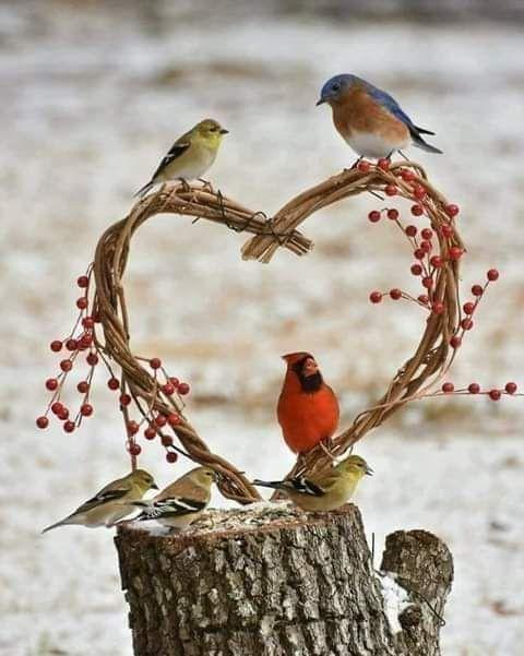 كلمات راقت لي Rachaasalem تويتر Pet Birds Pretty Birds Bird Pictures