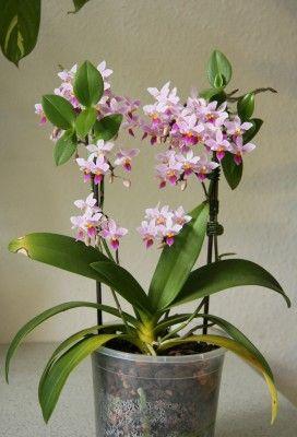 Espaços para Orquídeas – Orquídeas em interiores.