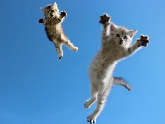 なんという浮遊感!猫たちが跳んだ瞬間を激写した写真11枚
