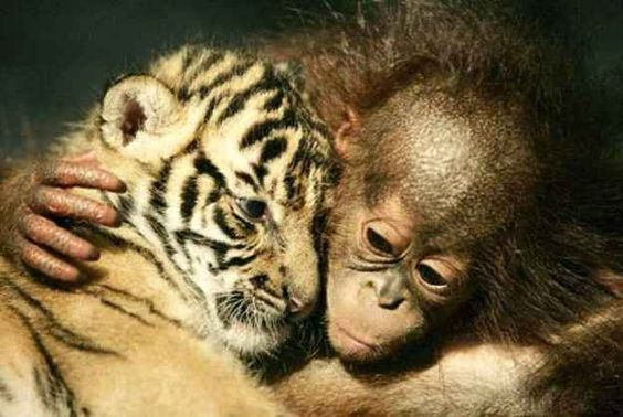 24 Photos Of Animals That Know What Love Is