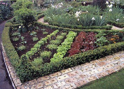 Potager image from new zealand potager the ornamental for Ornamental vegetable garden design