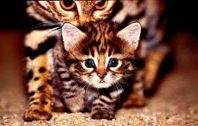 Resultado de imagen para gatos sobre piedras