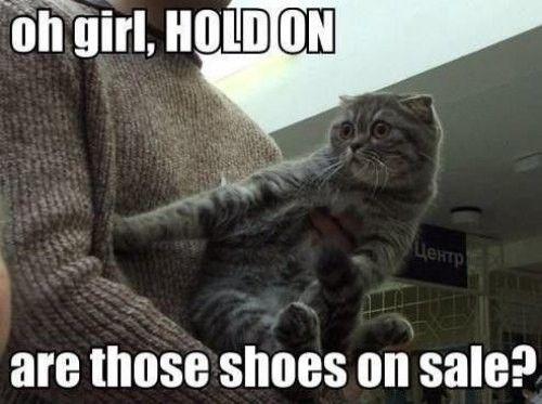 haha cute LOLCat
