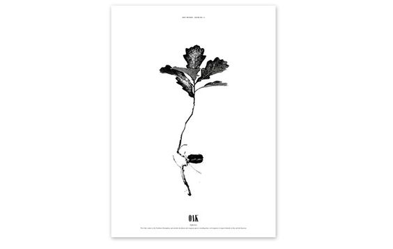 Poster-Grow ‹ DRY Things