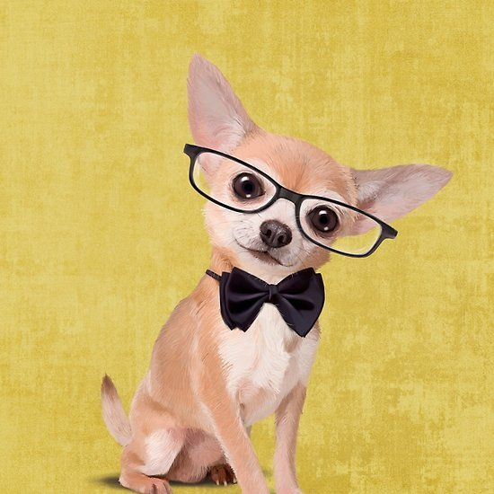 Mr Chihuahua Art By Sparafuori Features An Adorable Chihuahua Wearing Eyeglasses And A Bow Tie Animals Animal Illustration Chihuahua Art Funny Illustration