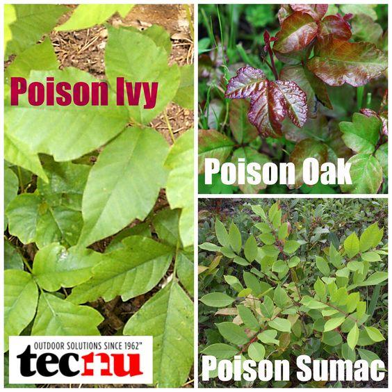 poisonous plant identification guide pdf