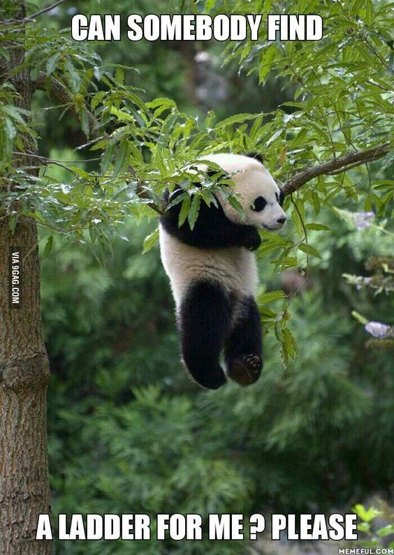 ❤️️Pandas - From Top 100 Best Oh pics, photos and memes. - SillyCool