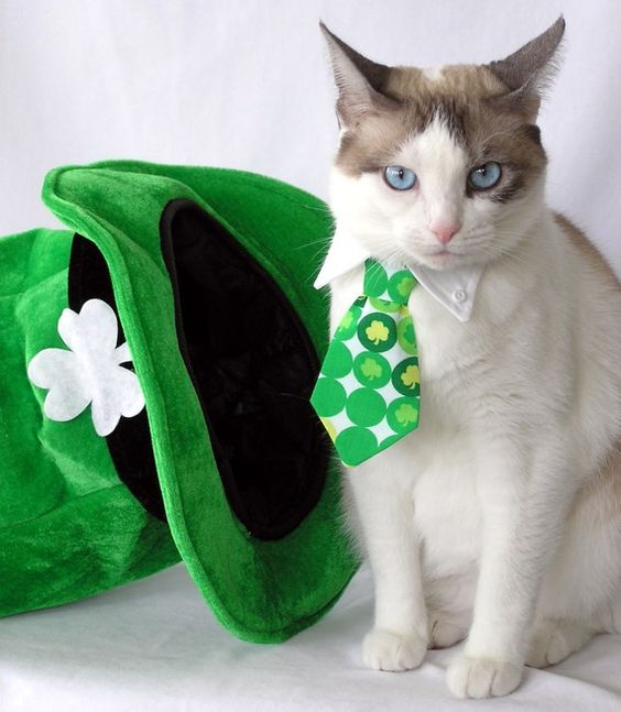 Dressed up for St Patricks Day :)