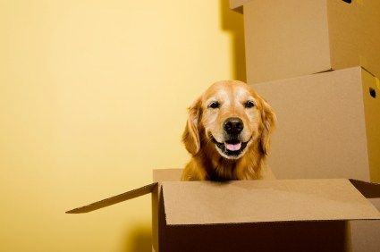 #Moving with a #pet can be #difficult if you don't do your research. There are a lot of #restrictions placed on #pets in many communities. #Boston #Mover #Movingtips