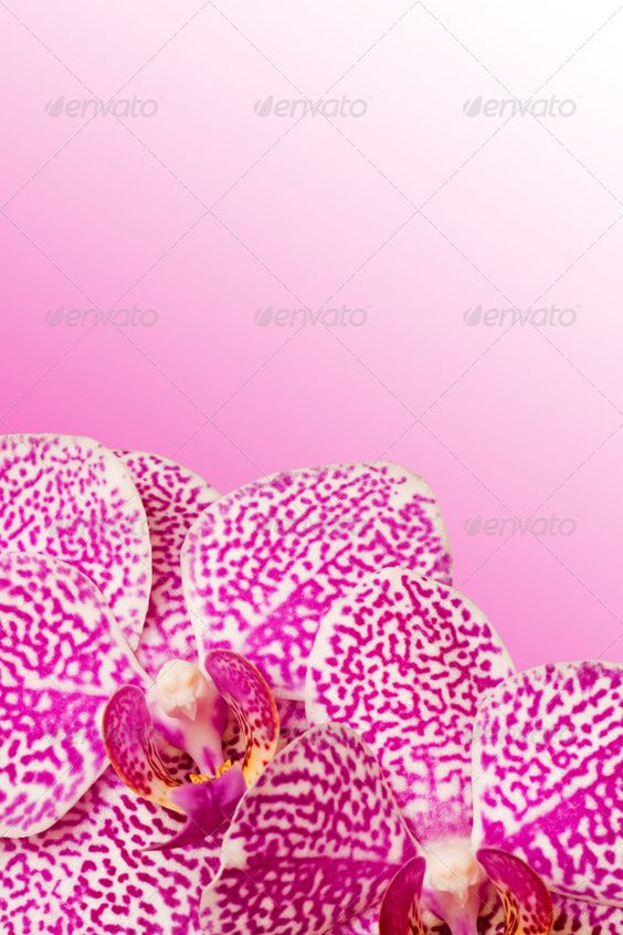 Orchid (bloom, blossoms, botanical, botany, bouquet, bright, color, colorful, colour, copy-space, decorative, elegant, flower, macro, nature, orchid, petal, plants, romance, tropical, violet)