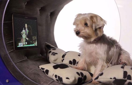 Samsung criou uma casa para cachorro conectada, com tablet e esteira. (Foto: Reprodução/Samsung)