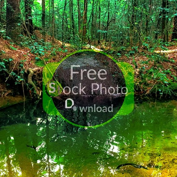 Download Free Photo - Spring Green - Flowing WaterFree and Public Domain Stock Photo Download