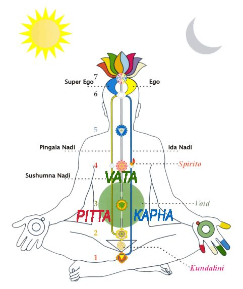 MBS guide to Ayurveda - Sunita Passi from Tri Dosha explains the concept of Ayurvedia body types and the basic characteristics of Vatta, Pitta and Kapha.