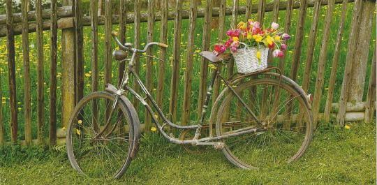 XXL-Postkarte mit nostalgischem #Fahrrad und einem leuchtenden Tulpenstrauß. A nostalgic bike with a colourful bunch of tulips.  http://bit.ly/1INBL06 #Postkarte #Tulpen #Schreibwaren #Nürnberg