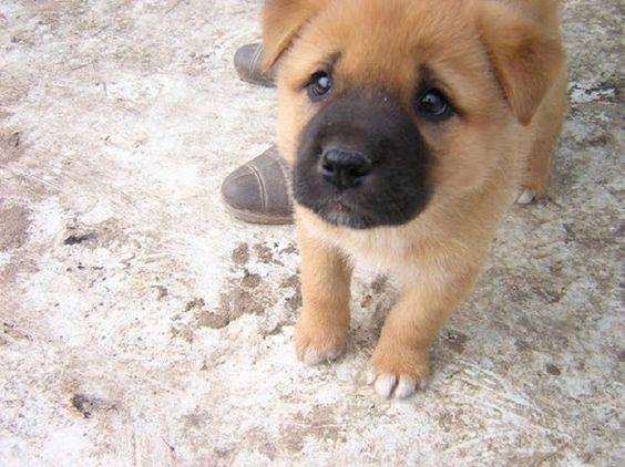 【画像あり】犬って「なんでこのタイミングでそんな指示をしてくるのか理解できないけどとりあえず従っておこう」って時にこんな顔するよね : 暇人\(^o^)/速報 - ライブドアブログ