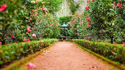 Top 10 Tips For Gardens In 2020 Horticulture Beautiful Gardens Small Space Gardening