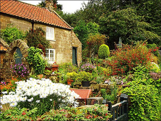 English Moors Garden by AcombDave